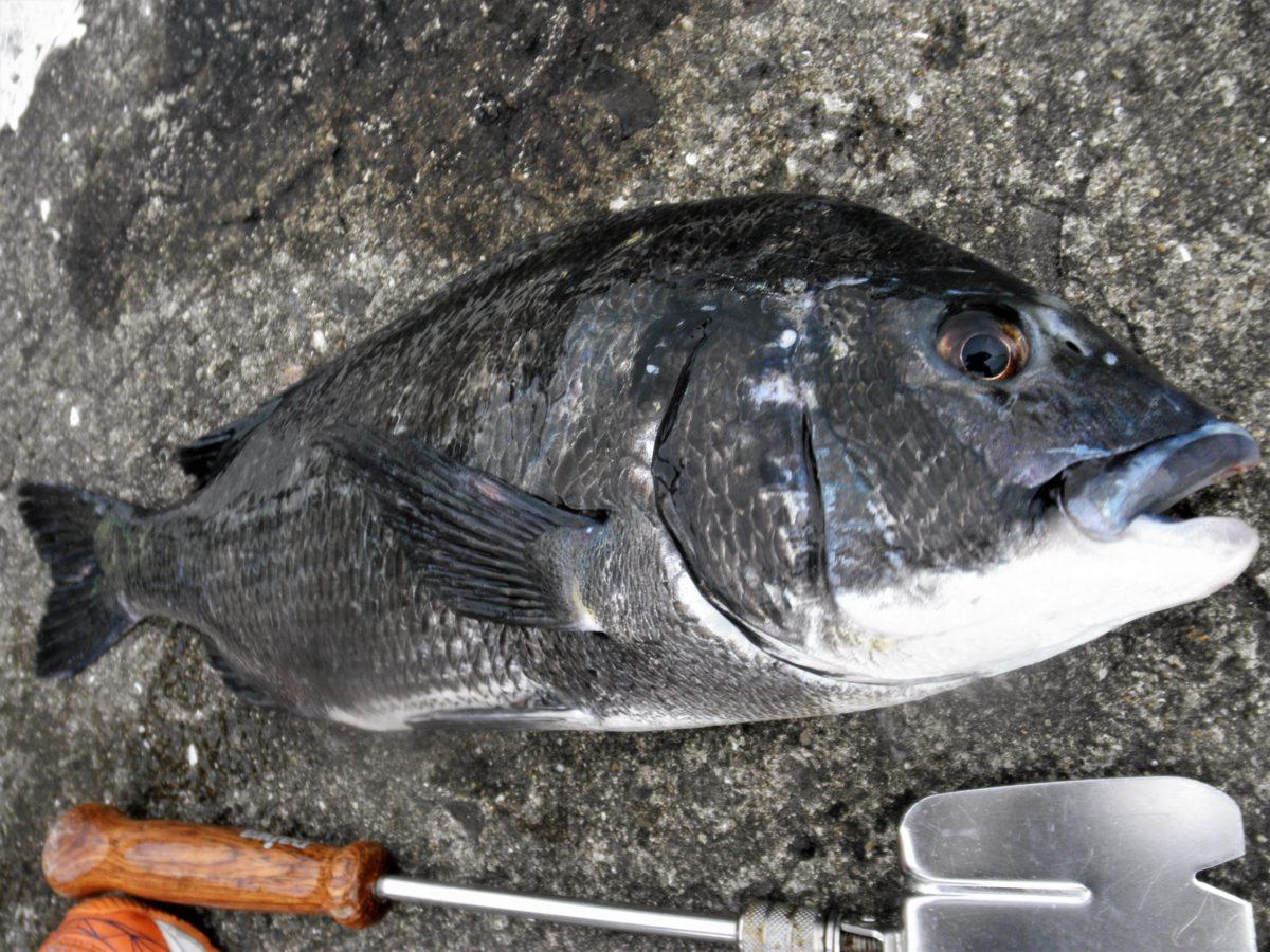 和歌山北港魚釣り公園でカゴ釣りしてきました